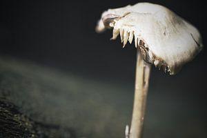 Pilz und Schnecke van