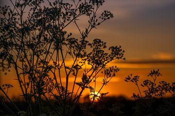 Untergehende Sonne. Orange, Gelb und Schwarz von Miranda Heemskerk