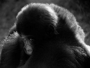 Kleine aap van Adri Vriens
