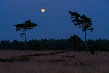 Volle maan op de Veluwe van Rick Kloekke