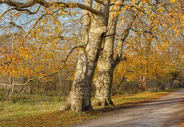 Nationaal Park Kennemerland, Bloemendaal, , Noord-Holland, Nederland van Rene van der Meer