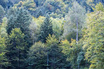Bos met groene bomen van Idema Media