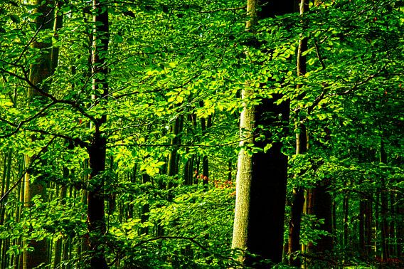 Leaves a forrest