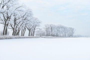 IJskoud winterlandschap tijdens een mooie winterdag in de IJsseldelta van Sjoerd van der Wal