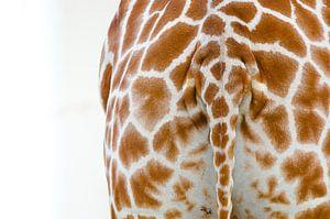 Giraffe Tail