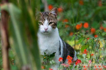 Kat sur Kevin Van Haesendonck