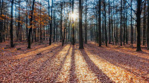 Laaghangende zon schijnt door Herfstbos van Evert Jan Luchies