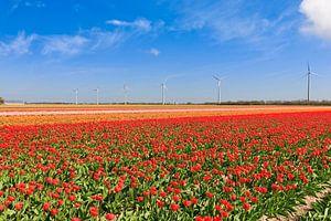 Windmolenpark tussen de bollenvelden