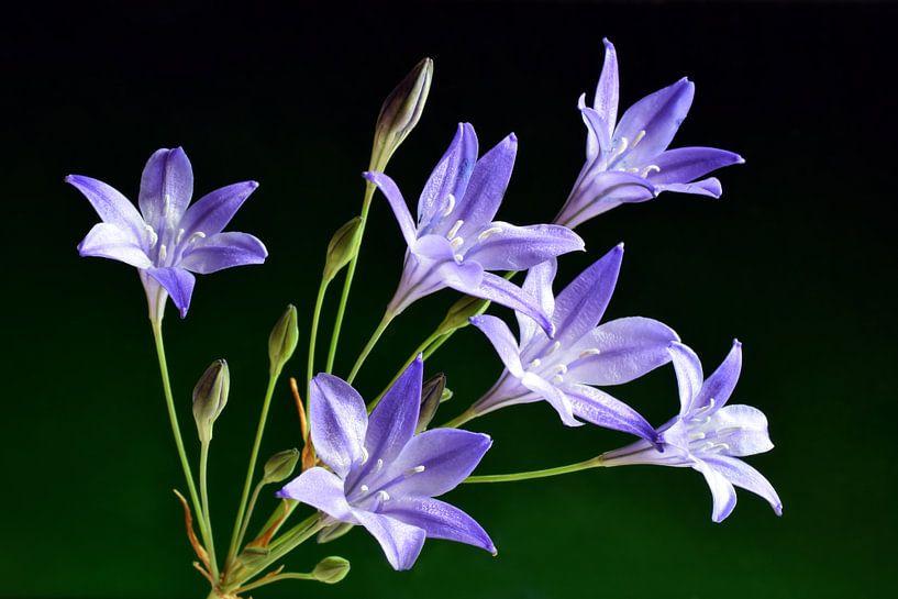Bermbloemen / Wilde bloemen van Mark Rademaker