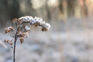 Winter sneeuw van