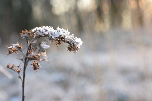 Winter sneeuw van Patricia van Nes