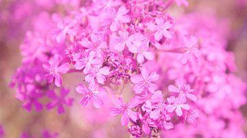 Rosa/violette kleine Blumen von Liv Jongman