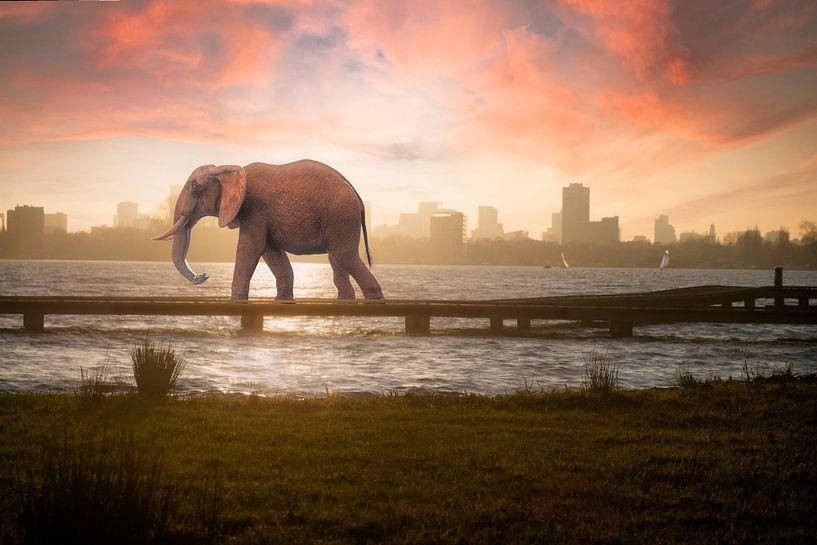 Urban Wild III van Arjen Roos