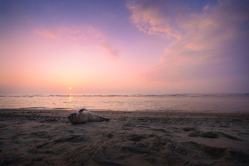 High Violet (phoque sur la plage) sur Thom Brouwer