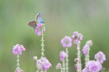 Heidenblauwtje in Love van Arien Linge
