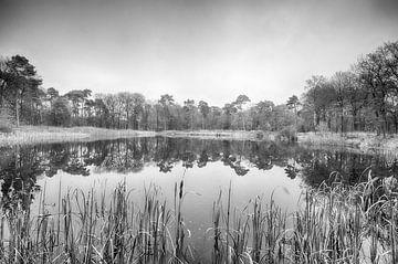 Lac derrière le roseau sur
