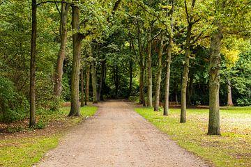 Laan in het park van Frank Herrmann