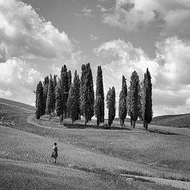 Italien in quadratischem Schwarz-Weiß, 'Die Zypressen der Toskana'. von Teun Ruijters