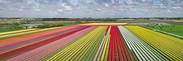 Tulpenvelden bij Krabbendam van Frans Lemmens