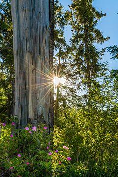Blüten im Wald von Denis Feiner