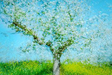 Apfelblüte von jowan iven