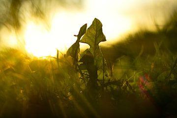 Blätter im Wind von Maarten Borsje