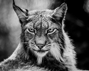 Lynx portret van Mario Visser