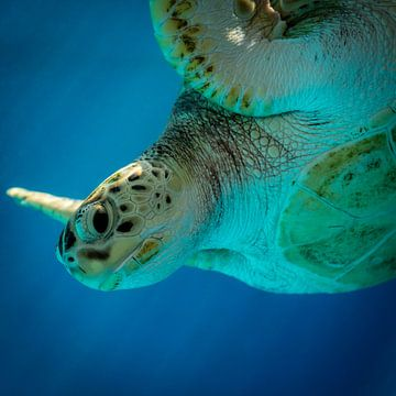 Zeeschildpad sur Mark De Rooij