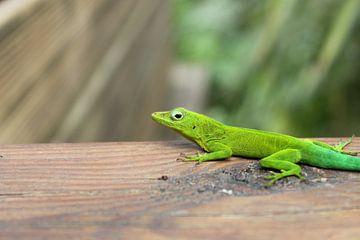 Salamander von Anita Moek