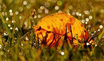 Herfstblad tussen de sprankelingen van de druppels in het gras van Birgitte Bergman