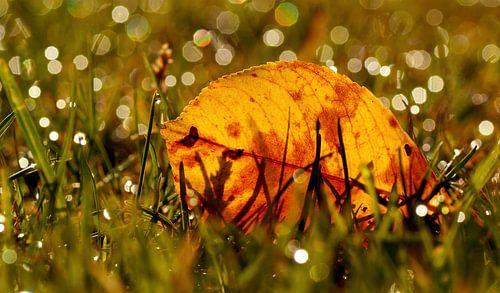 Herfstblad tussen de sprankelingen van de druppels in het gras