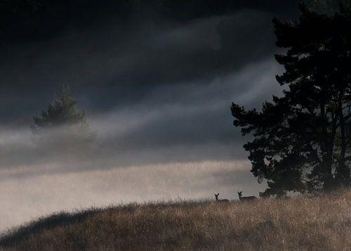 Edelherten tijdens een mistige morgen