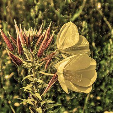 Digital Art Medium Blumen Alt von Hendrik-Jan Kornelis