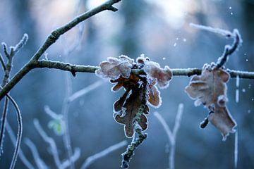 winter in het bos van Karijn Seldam