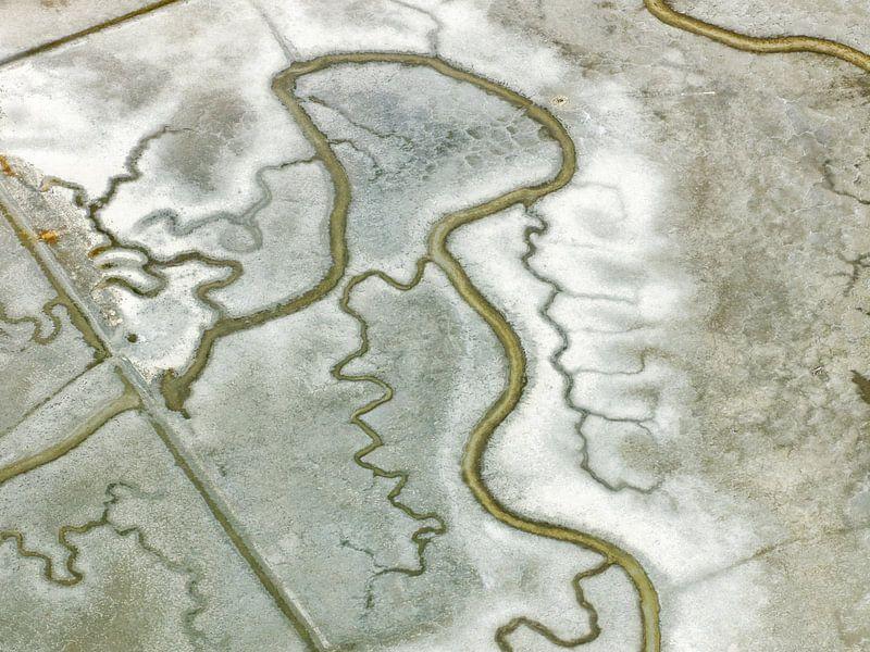 Moeras in de Baai van San Francisco van Marco van Middelkoop