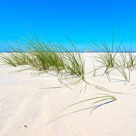 Helmgras op het uitgestrekte strand van Schiermonnikoog van Jenco van Zalk