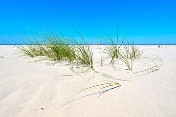 Marramgras am ausgedehnten Strand von Schiermonnikoog von Jenco van Zalk
