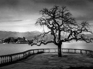Lago Maggiore in Schwarz Weiß von Alexander Dorn