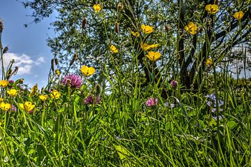 Fleurs du printemps sur Frans Blok