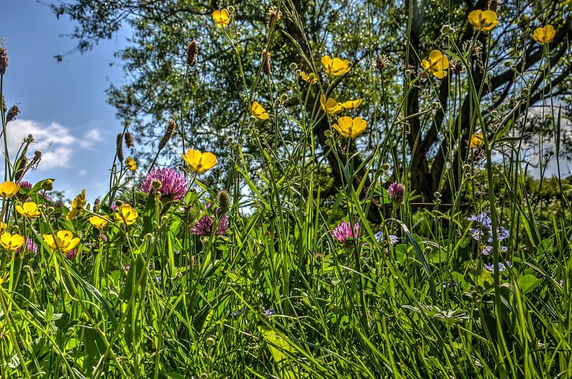 Voorjaarsbloemen van Frans Blok