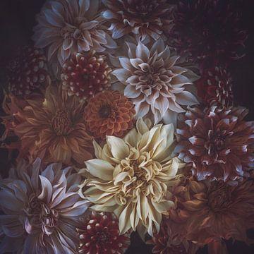Herfsttinten Dahlia collectie