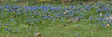 bloemen van Marco Bakker