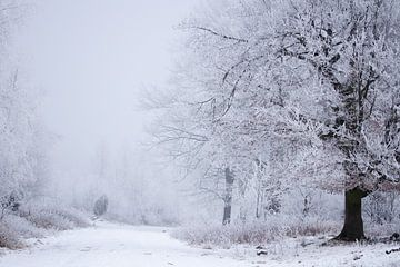 Bosweg met besneeuwde bomen van Karijn | Fine art Natuur en Reis Fotografie