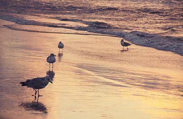 Meeuwen op het strand van