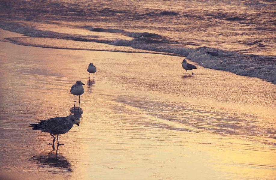 Meeuwen op het strand van LHJB Photography