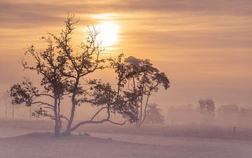 Mistige zonsopkomst Drunense Duinen van
