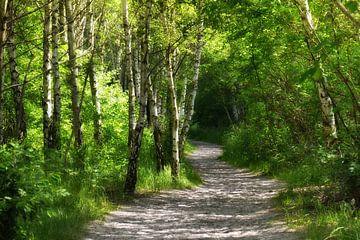 Birch Forest van Violetta Honkisz