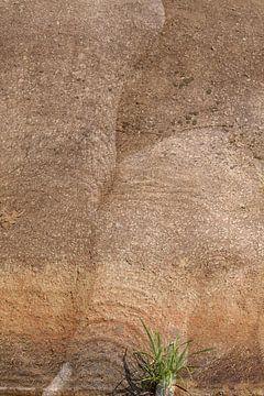 Elefanten-Geist von Bobsphotography