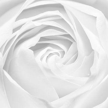Roos van Christiaan Onrust