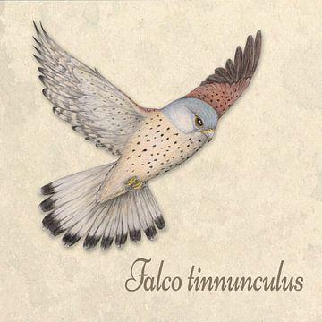 Vliegende torenvalk illustratie van Bianca Wisseloo